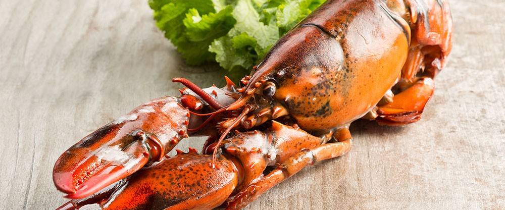 Frozen Whole Lobster